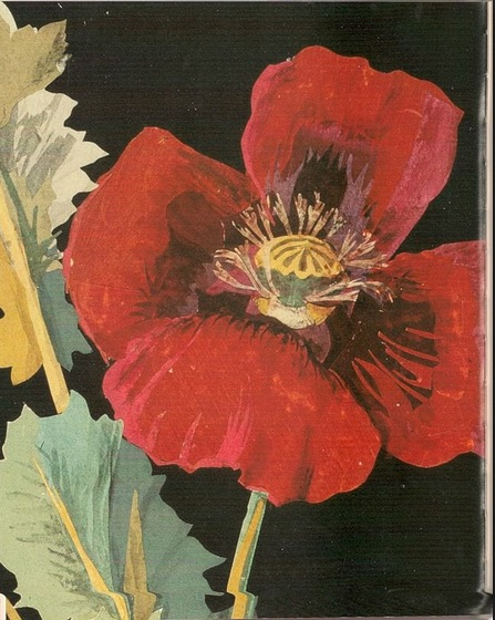 Poppy painted by Mrs Delany
